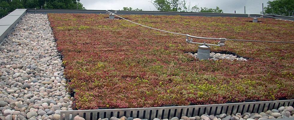 Geringer Pflegeaufwand bei bepflanzten Dächern