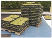 Verlegung Completa Bepflanzung Dachgarten