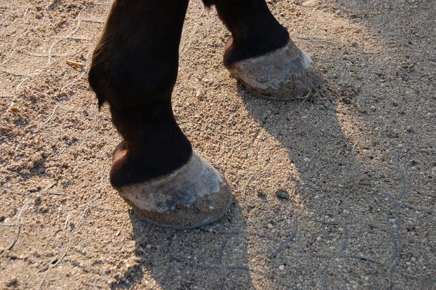 Consolidamento Fondi Equestri_6