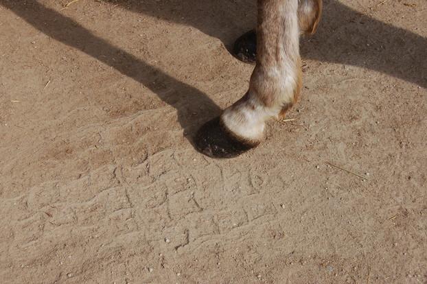 Consolidamento Fondi Equestri_8