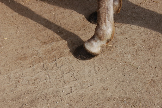 Consolidation of equestrian surfaces_9