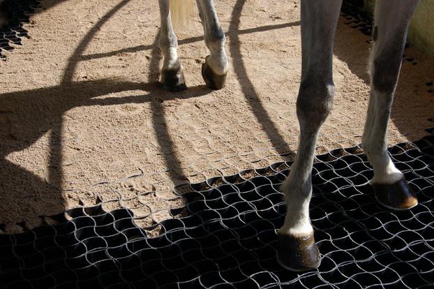 Consolidamento Fondi Equestri_13