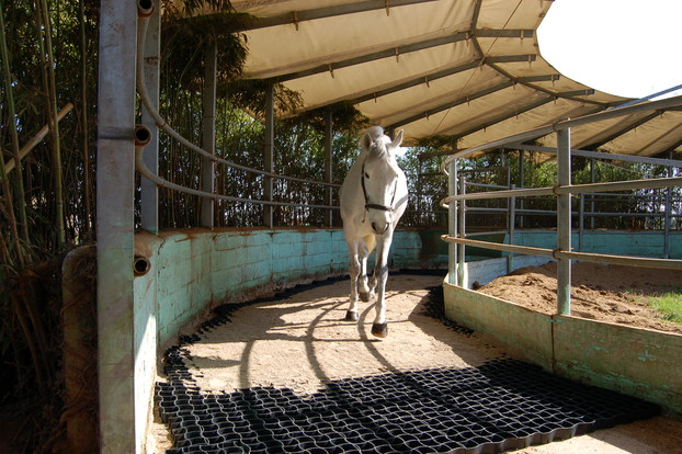 Consolidation of equestrian surfaces_13