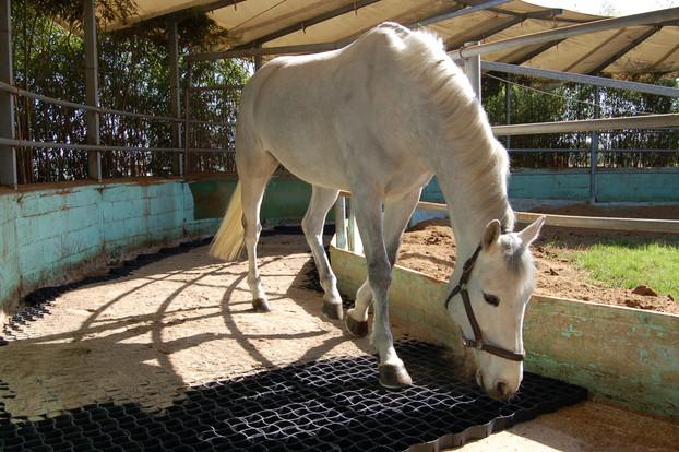 Consolidamento Fondi Equestri_15