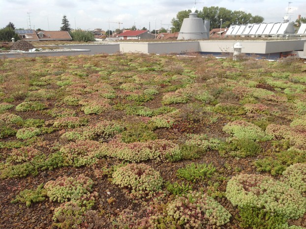 Extensive Roof Gardens with Sedum