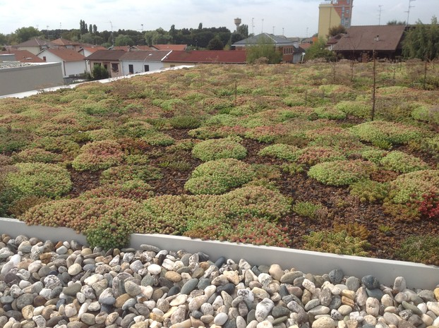 Drainroof - Extensive Roof Gardens with Sedum