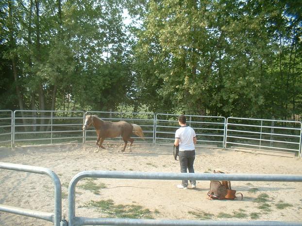 Consolidamento Fondi Equestri_19