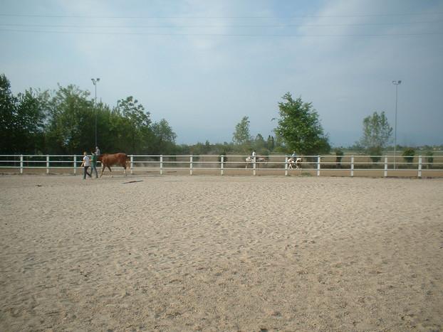 Consolidamento Fondi Equestri_18