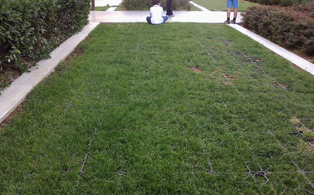 Parking solution on existing lawn_1