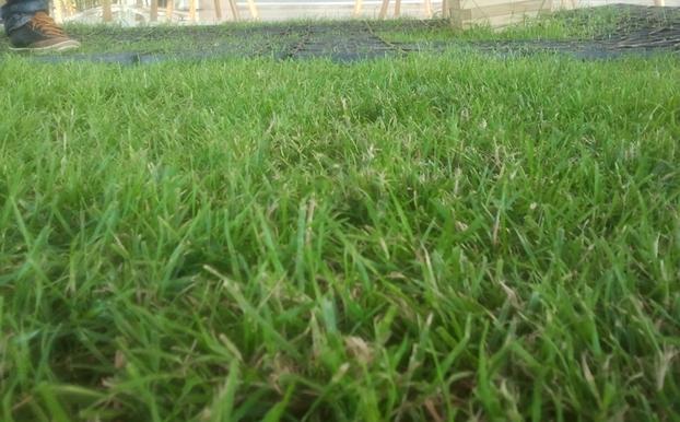 vorhandene Rasenfläche