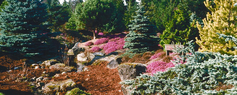 Zwergkoniferen und Kiefern für Dachgarten