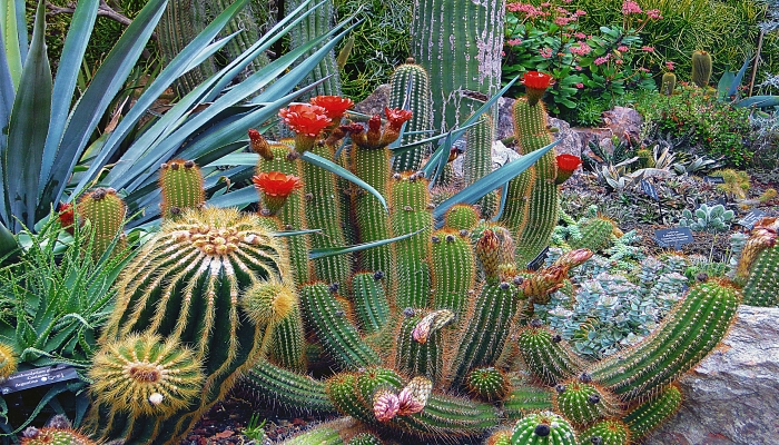 Water Wise Gardening. Cactus Garden