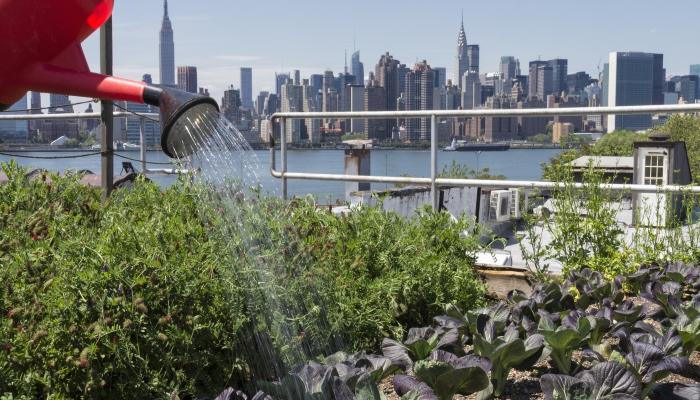 Urban farming examples